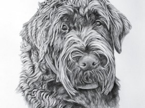 Black Russian Terrier pencil drawing