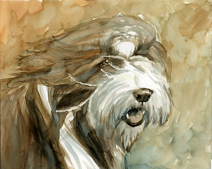 Beardie (Bearded Collie) painting