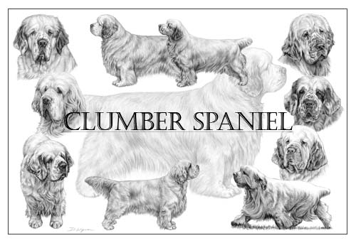 Clumber Spaniel pencil drawing collage