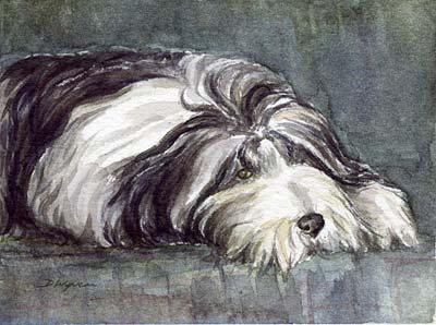 Beardie (Bearded Collie) painting