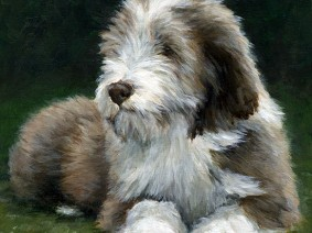 Brown Beardie (Bearded Collie) puppy painting