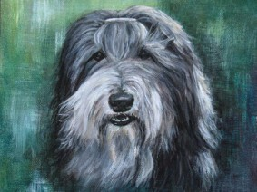 Bearded Collie (Beardie) painting commission