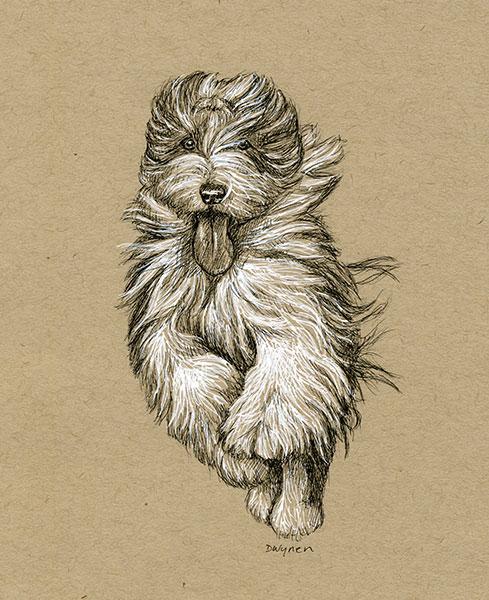 4. Running Beardie
