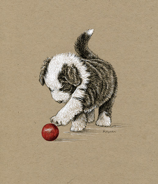 8. Beardie Pup with Red Ball