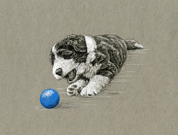 9. Beardie Pup with Blue Ball