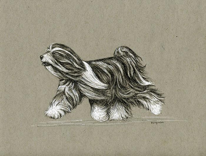 Moving Tibetan Terrier