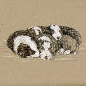16. Sleeping Beardie Pups