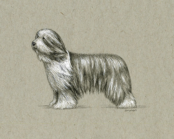 1. Standing Beardie