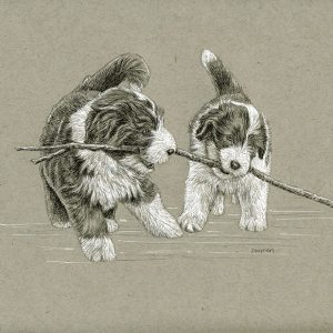 Beardie Pups with Stick