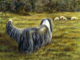 Bearded Collie (Beardie) with sheep painting