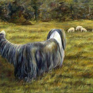 Bearded Collie (Beardie) with sheep painting