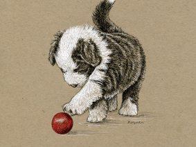 Bearded Collie (Beardie) puppy ink drawing
