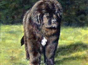 Newfoundland Puppy (Newfie) Painting