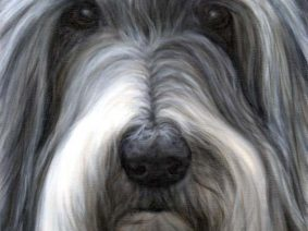 Bearded Collie (Beardie) Painting