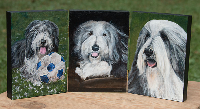 Bearded Collie (Beardie) Paintings
