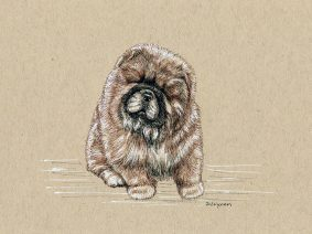 Chow Chow Puppy Drawing