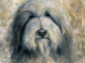 Bearded Collie (Beardie) Painting