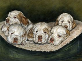 Clumber Spaniel Puppies Painting