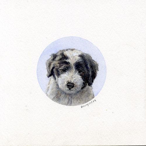 Bearded Collie (Beardie) Puppy Painting