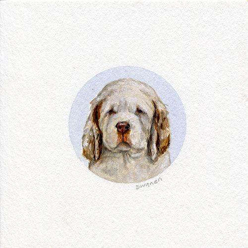 Clumber Spaniel Puppy Painting