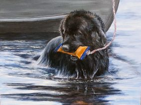 Newfoundland Dog (Newfie) Painting