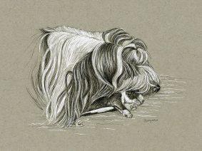 Beardie drawing