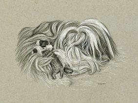 Beardie Ink Drawing