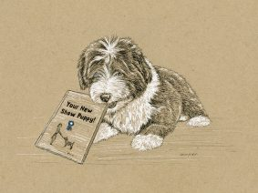 Beardie Pup Drawing