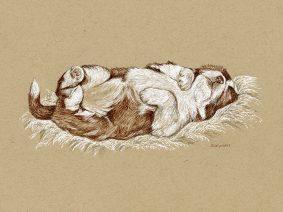 Beardie Puppy Drawing