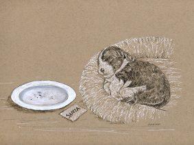 Beardie Puppy Ink Drawing