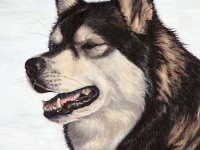Alaskan Malamute Painting